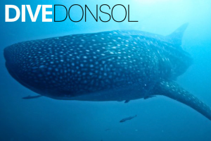 DIVE Donsol