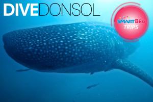 SBT Dive Donsol